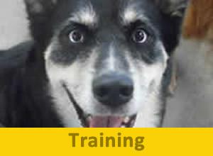 Training-300x220
